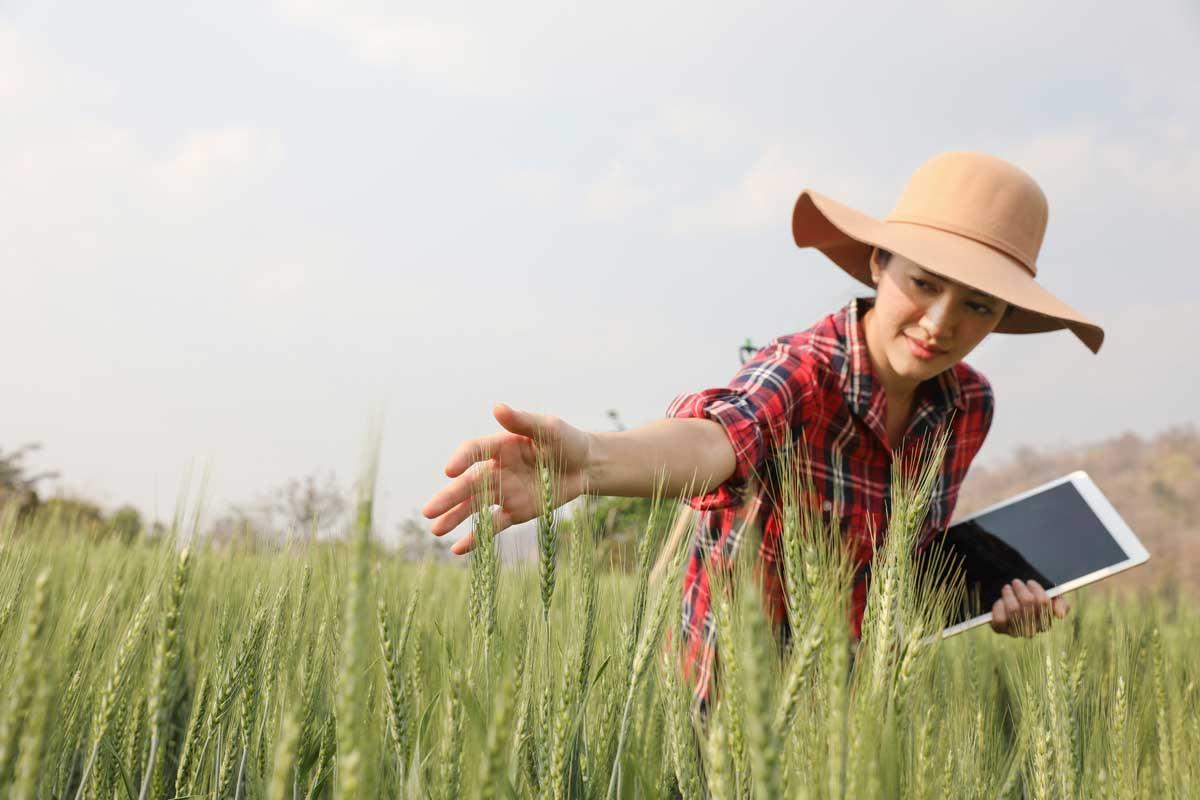 Agricultura moderna 4.0